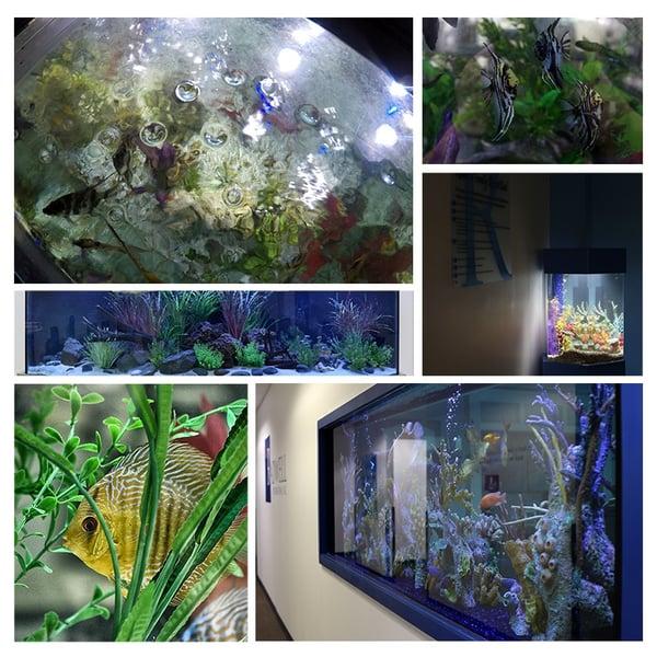 RadwellFishcollageforBlog